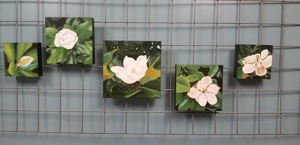 Magnolias bloomin